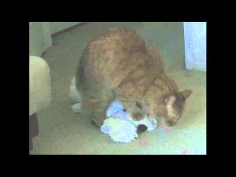 My Cat Has Sex With Stuffed Animals. video