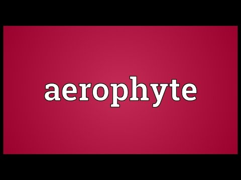 Header of aerophyte