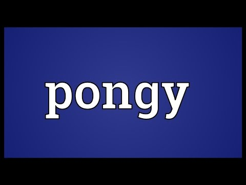 Header of pongy