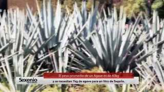 "Video reportaje: ""ELABORACIÓN DEL TEQUILA"" - Sexenio TV"