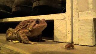 Killer Frog * Terror Toad * Frog Eating Bugs * Terrorist Toad