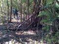 penangkapan perkosaan di hutan