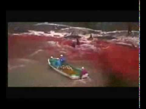 Matt Damon Narrates the Story of Dolphin Slaughter in Japan