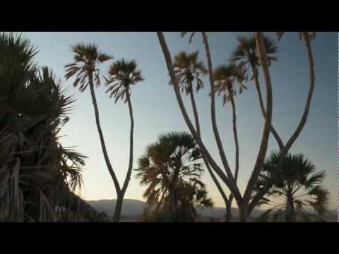 Doum Palms  Eilat Nature Reserve (Israel) שמורת טבע דקל הדום אילת