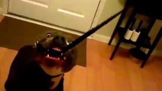The Good Dog Minute 12/1/14: Saving Sully, the leash aggressive, resource-guarding pitbull