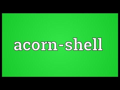 Header of Acorn-Shell