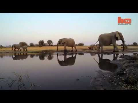 CAUGHT ON CAMERA ELEPHANT STOMPS GO PRO - ELEPHANT
