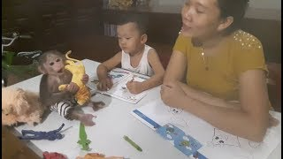 Baby Monkey | Doo Plays And Colors With His Brother - Funny Animals
