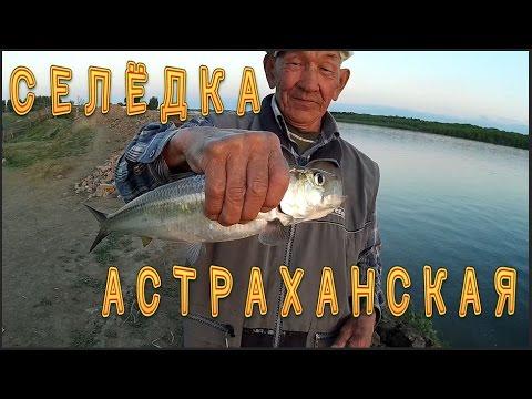астрахань рыбалка в селитренном база селитрон в гостях у володи печенкина