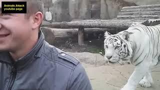 Combat des animaux - Combat les plus étonnantes Animal sauvage #42