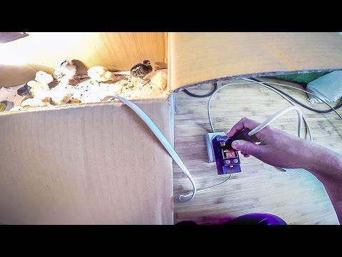 Терморегулятор для брудера своими руками