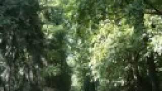 Vídeo 42 de Enya