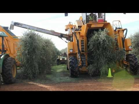 Oxbo 6420 Super High Density Olive Harvester Music Videos