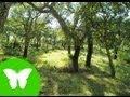 La Eduteca - Los ecosistemas (II): relación y nutrición