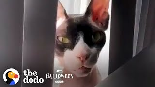 Scary Cat Threatens His Owner Over FaceTime  | The Dodo