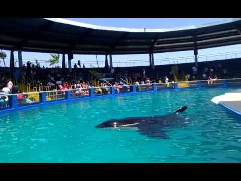 Emotional visit to see Lolita at Miami Seaquarium