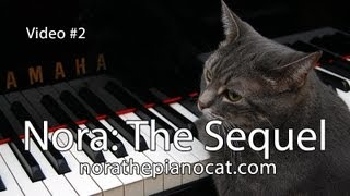 Nora The Piano Cat: The Sequel - Better than the original!