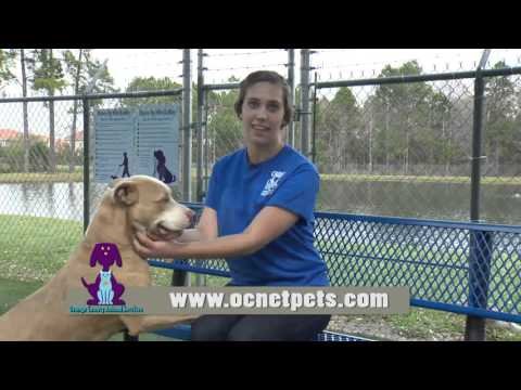 Orange County Animal Services - I Volunteer Because . . . Lexi
