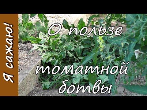 Применение томатной ботвы в огороде – настои, отвары и пр.