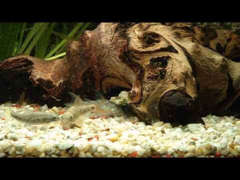 Aquarium 60 liter s wasser high quality hd video for Decoration aquarium 60 litres