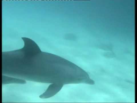 Delphinschwimmen Ägypten mit Morgenland Reisen-Hurghada & Marsa Alam