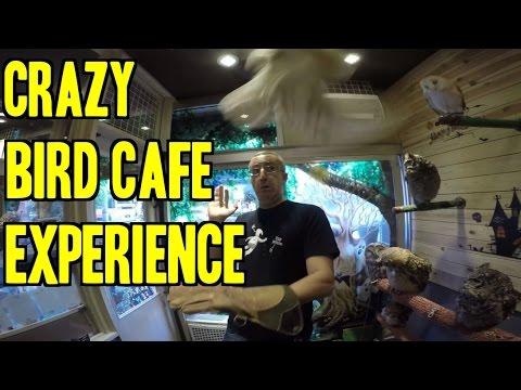 Coolest Bird Cafe In Tokyo