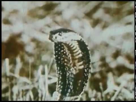 Brian Jonestown Massacre - Unknown