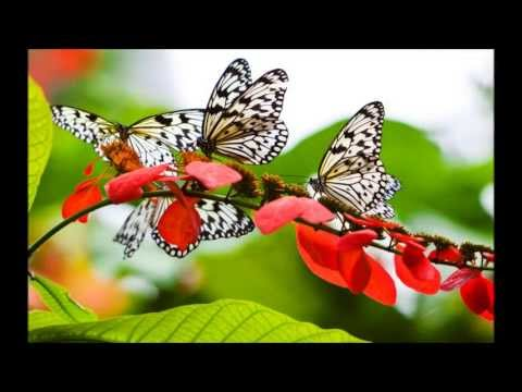 Butterfly Song - Malayalam video