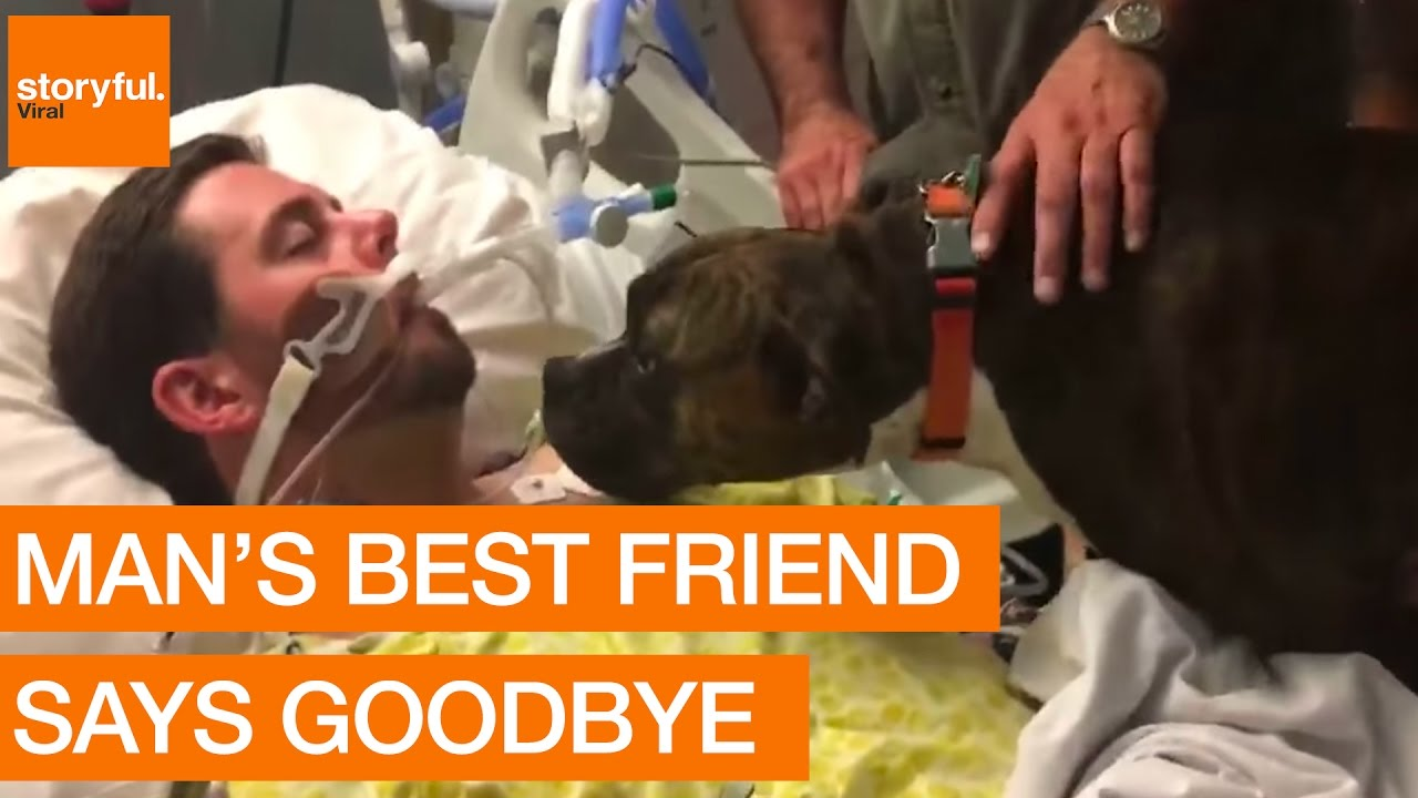 Dogs Final Goodbye at Owners Hospital Bedside