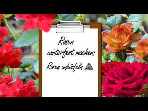 Rosen Winterfest Machen: Rosen Anhäufeln