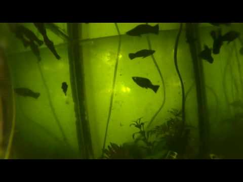 ELE Explorer 4K Action Cam Underwater Test (Sink & Fish Tank)