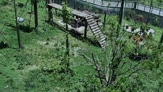 Happiness Village Baby Panda Garden 07-28-2018 05:30:55 - 06:30:53