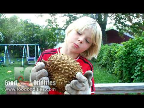 Remy Eats Durian Fruit (Food Oddities - www.foododdities.com)