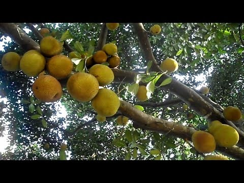Super anti-diabetes plant & most effective means to cure diabetes naturally