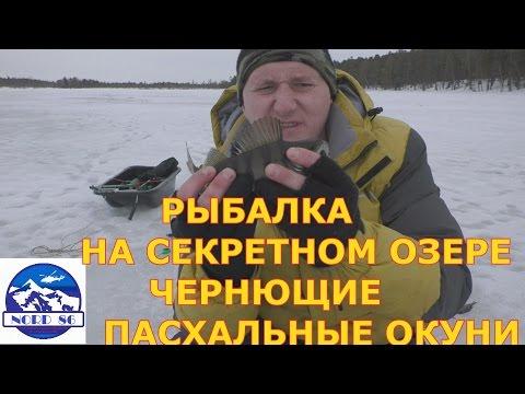отчеты о рыбалке в подмосковье в 2017г