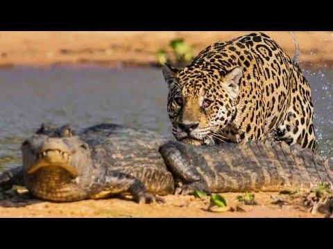 TOP 10 ANIMALES MÁS LETALES DE AMÉRICA DEL SUR