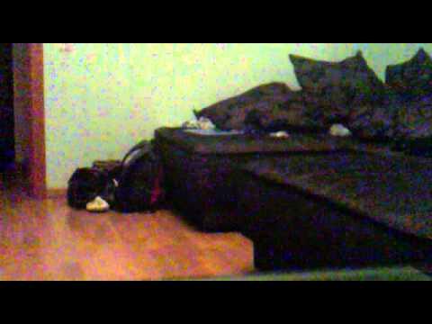 Братишка трахнул спящую сестру смотреть видео бесплатно?