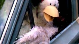 foster farms chickens commercial