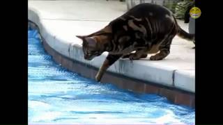 Funny Cats In Water - Compilation 2014