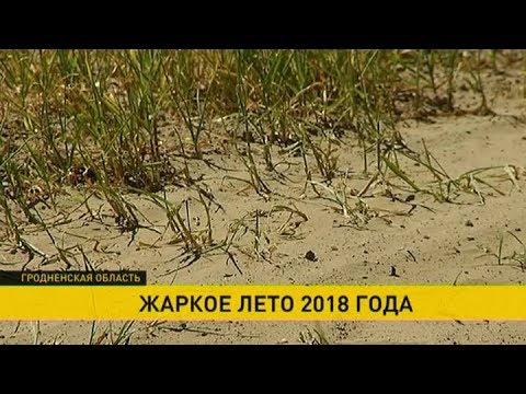 Небывалая засуха в Гродно: Неман мелеет, посевы гибнут