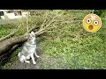 Lagu Husky REACTS to the Hurricane Damage! Gohan DuringAfter The Storm!