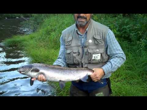 Mark Sorokwasz / Atlantic Salmon Fly Fishing