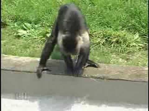 Fort Wayne Children's Zoo: Monkey Island