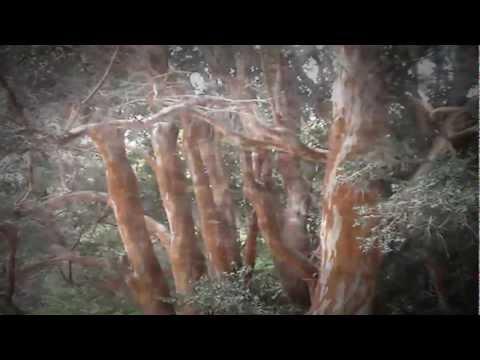 Cenizas del Paraíso. Villa La Angostura Oct 2011