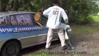 Kayman Premier Protection Dog