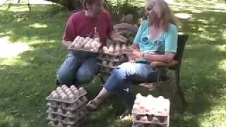 Buying peacock hatching eggs #21