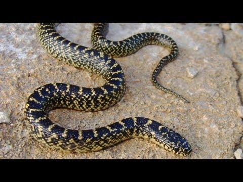 Common Snake Illnesses | Pet Snakes