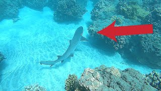 First Time Running Into a Shark While Spearfishing!