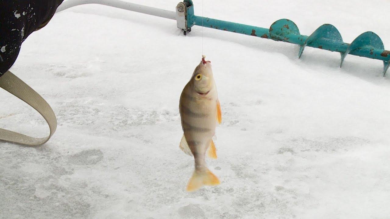 Ловля с последнего льда