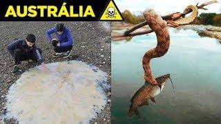 Veja por que a AUSTRÁLIA é O PAÍS MAIS PERIGOSO DO MUNDO - 2